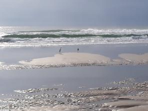 beach foam and birds