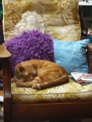 sleeping Tiger cat